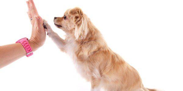 edad para mejor educar a un perro